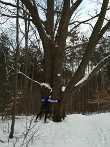 Kirk tree