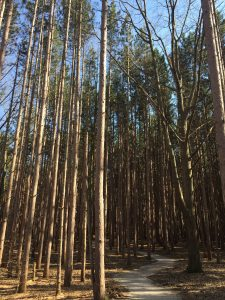 RM trees
