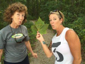 connor-big-leaf